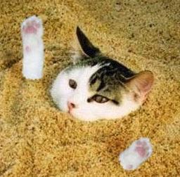 חתול בחול-האתר של יוסי גולן